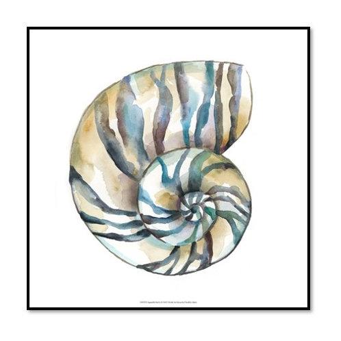 Aquarelle Shells II - Framed & Mounted