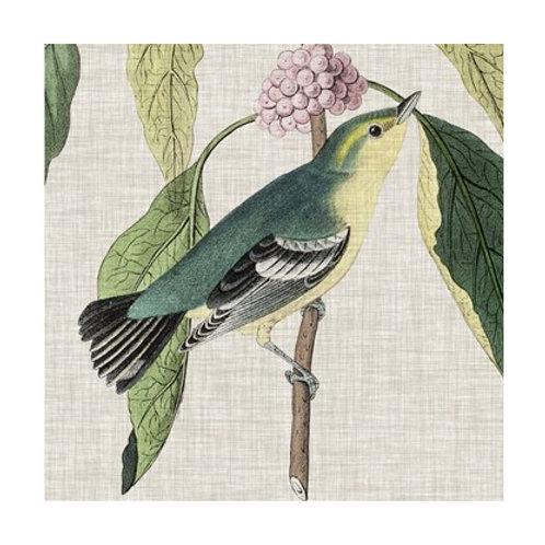 Avian Crop IV - Canvas Art
