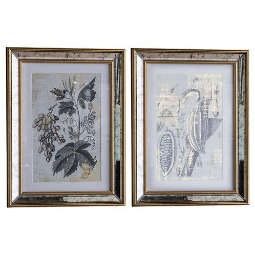 Bottany Framed Art - Set of 2
