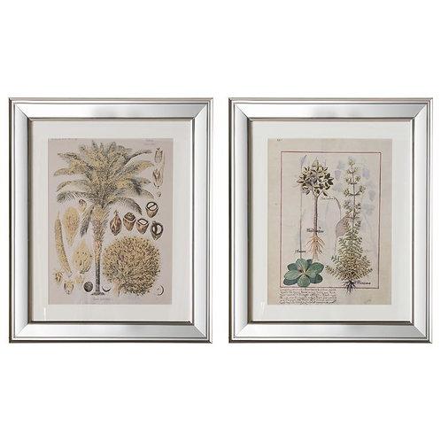 Herbs II Framed Art - Set of 2