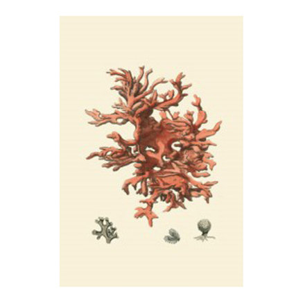 Red Coral III - Canvas Art