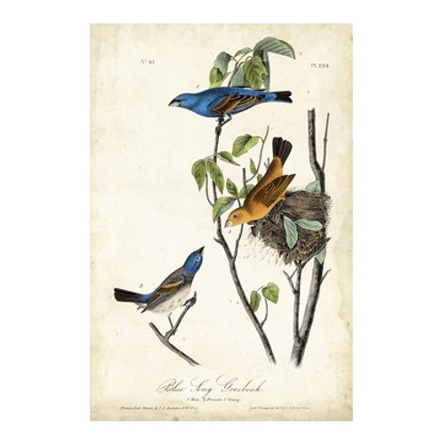 Blue Song Grosbeak - Canvas Art