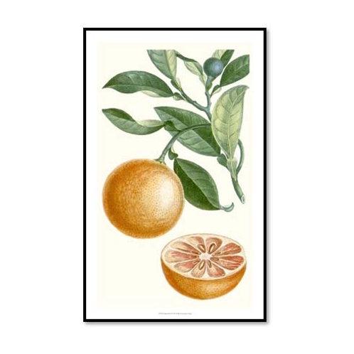 Turpin Fruit II - Framed & Mounted Art