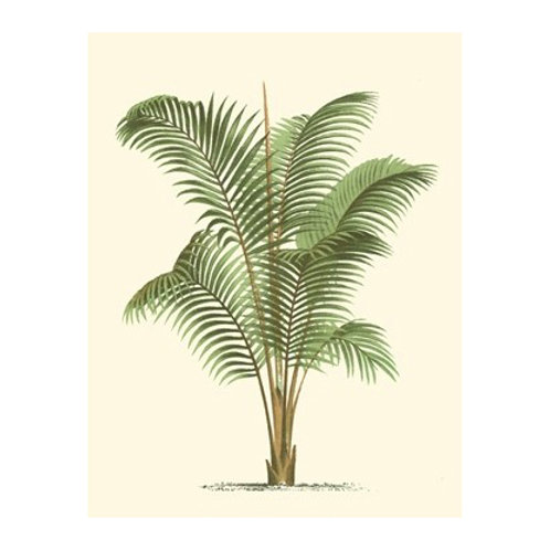 Coastal Palm II - Canvas Art