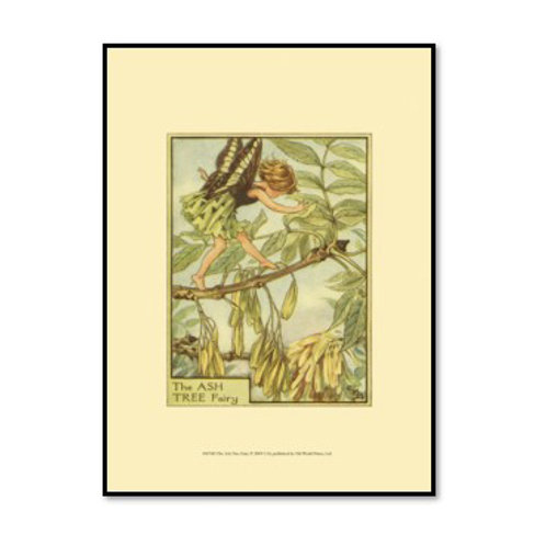 The Ash Tree Fairy - Framed & Mounted Art