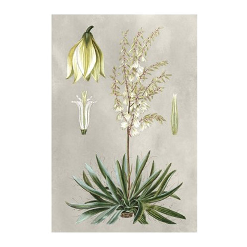 Tropical Varieties I - Canvas Art