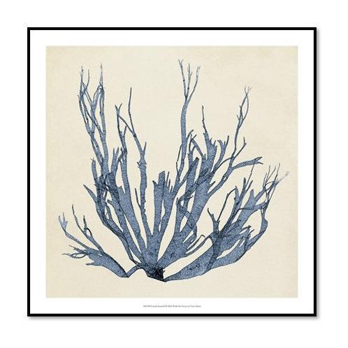 Coastal Seaweed I - Framed & Mounted