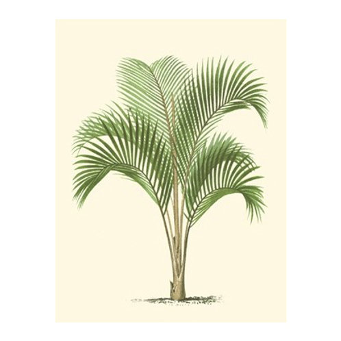 Coastal Palm I - Canvas Art