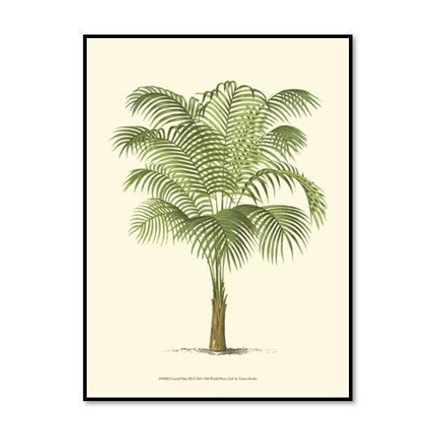 Coastal Palm III - Framed & Mounted