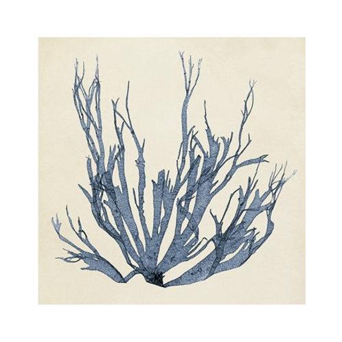 Coastal Seaweed I - Canvas Art