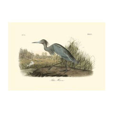 Blue Heron - Canvas Art