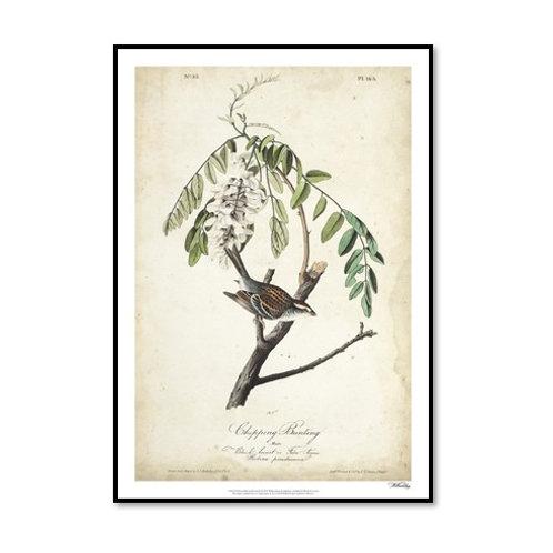 Delicate Bird and Botanical I - Framed & Mounted