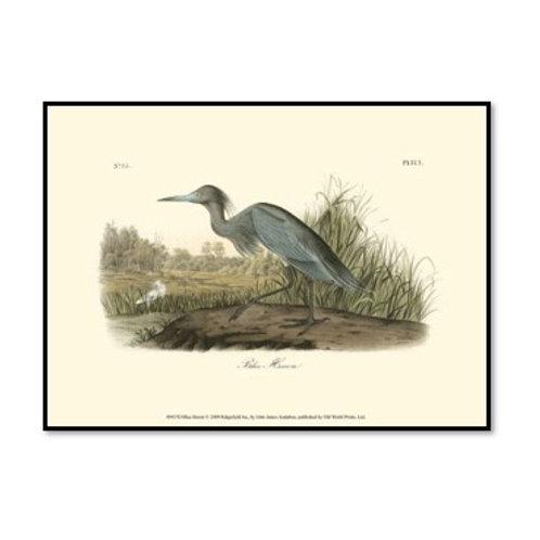 Blue Heron - Framed & Mounted