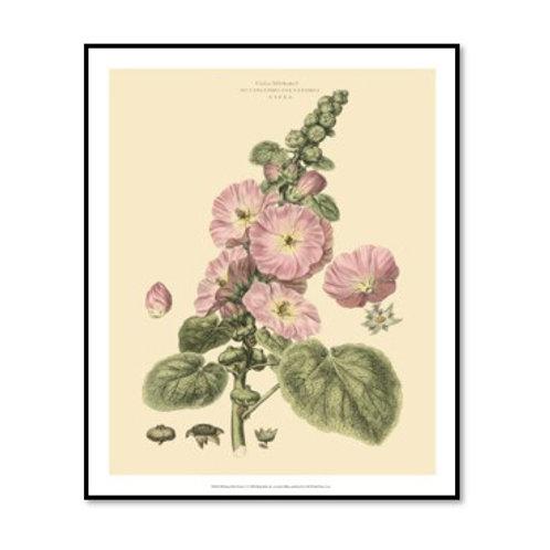 Blushing Pink Florals V - Framed & Mounted