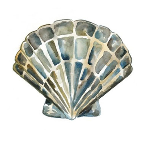 Aquarelle Shells IV - Canvas Art