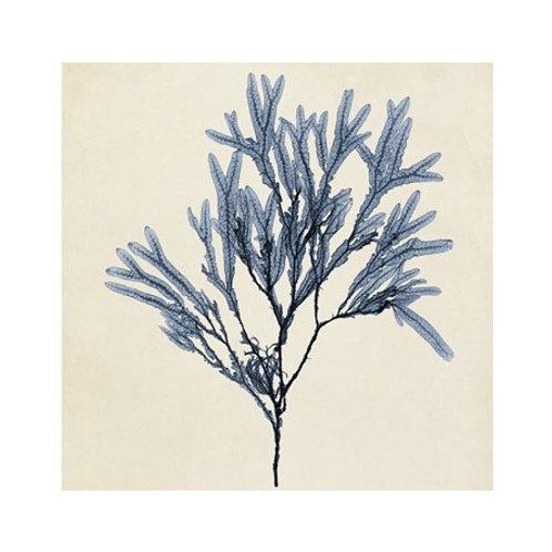 Coastal Seaweed VIII - Canvas Art