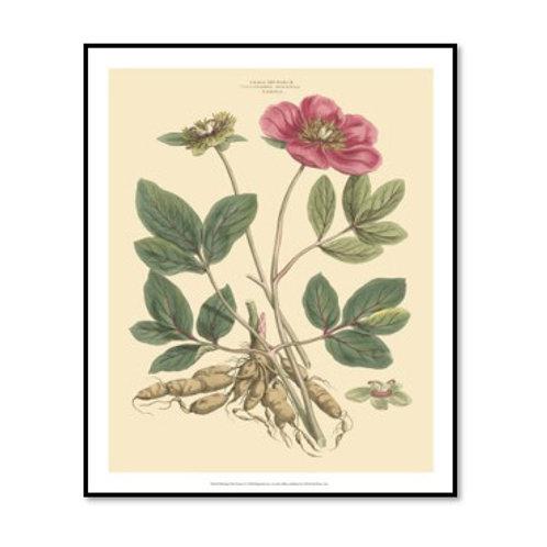 Blushing Pink Florals I - Framed & Mounted