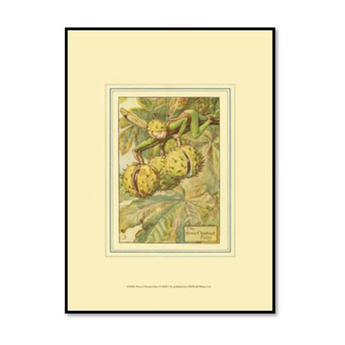 The Horse Chestnut - Framed & Mounted Art
