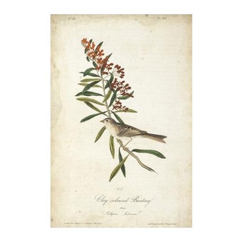 Delicate Bird and Botanical II - Canvas Art