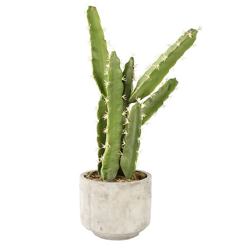 Fake Cactus Plant - Pack of 2