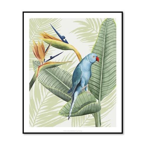 Avian Paradise III - Framed & Mounted