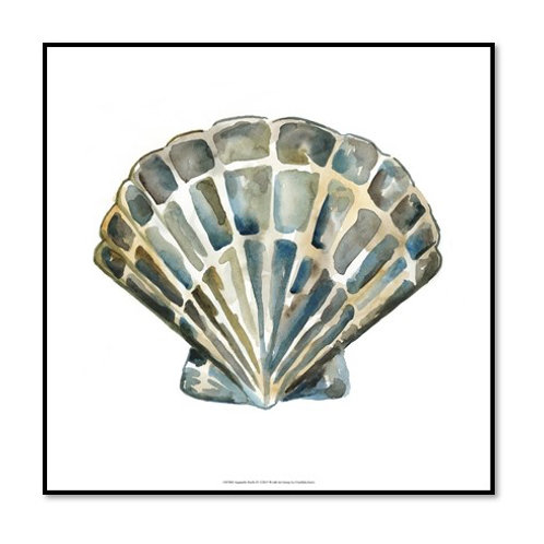 Aquarelle Shells III - Framed & Mounted