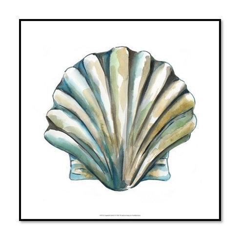 Aquarelle Shells VI - Framed & Mounted