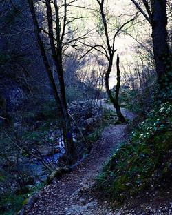 Into the woods 🌿🍃🌲🌳🍁🍂🌾✨ #ferratecasto #parcodellefucinedicasto #parcodellefucine #igers #iger