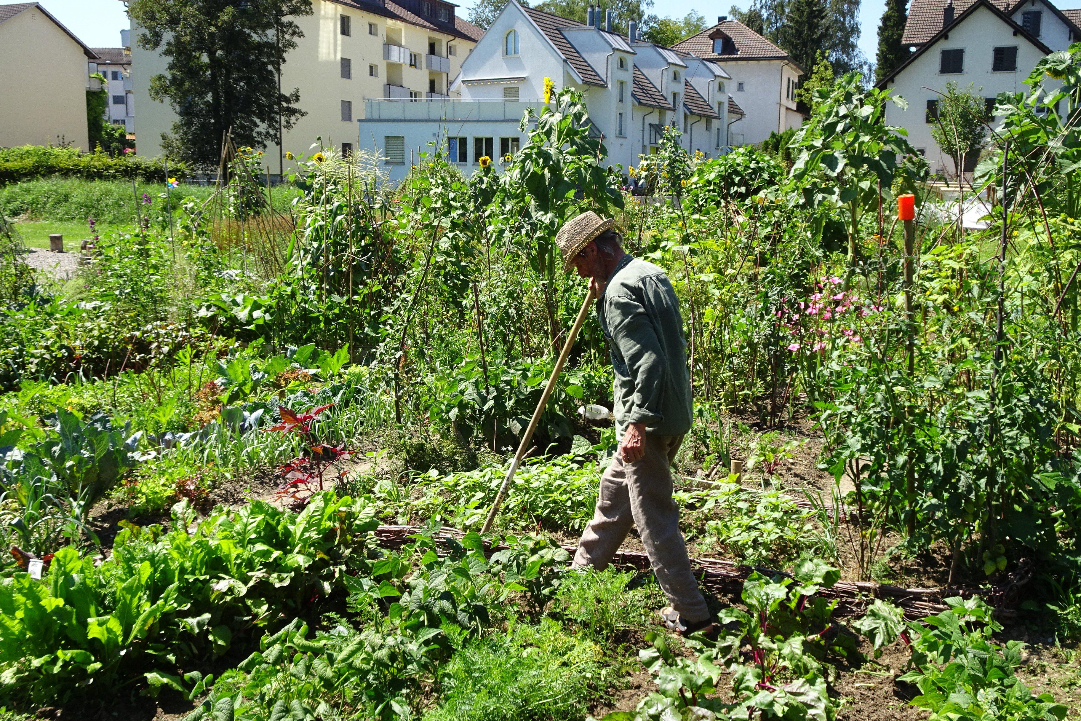 2020-08-07 Ogif Garten 08, Walter