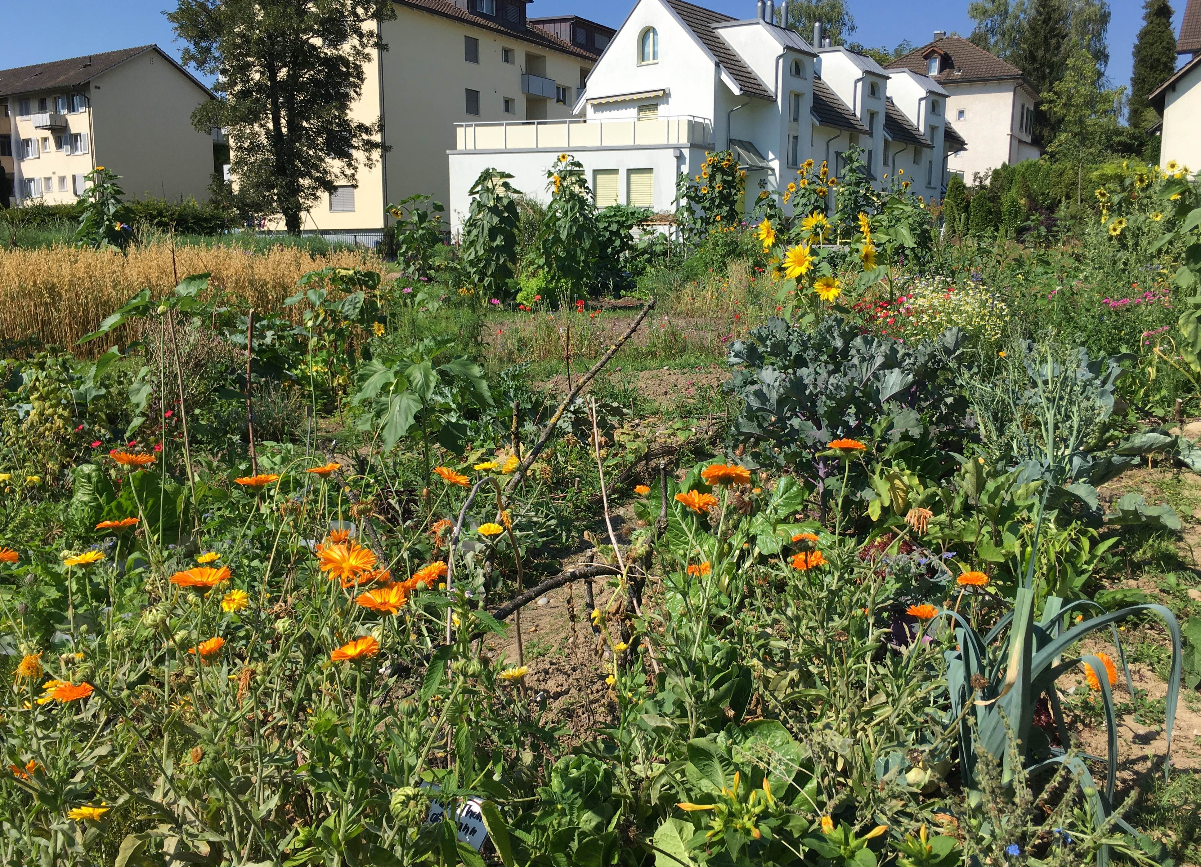 2020-07-28 Ogif Garten, 6