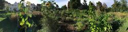 2020-08-13 Ogif Garten 1b