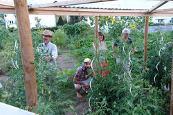 2020-08-06 Ogif, Tomaten