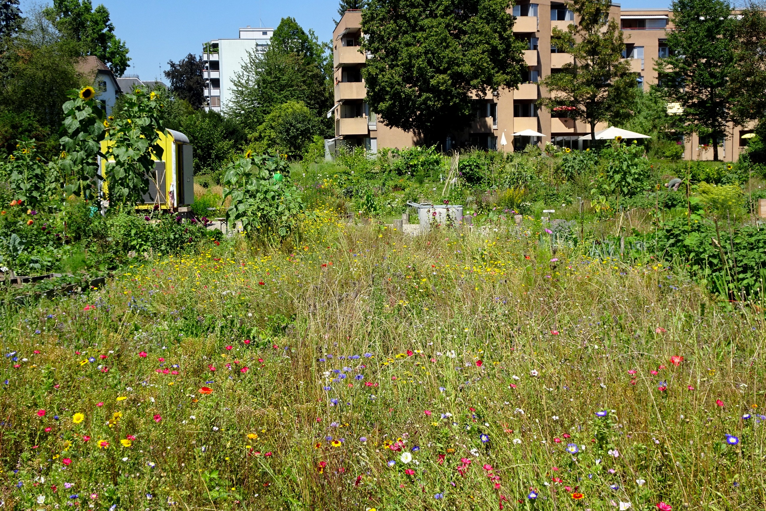 2020-08-07 Ogif Garten 05
