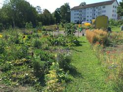2020-07-28 Ogif Garten, 4