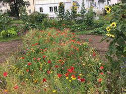 2020-07-24 Ogif Garten 02
