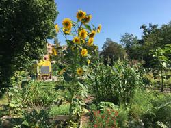 2020-07-28 Ogif Garten, 7