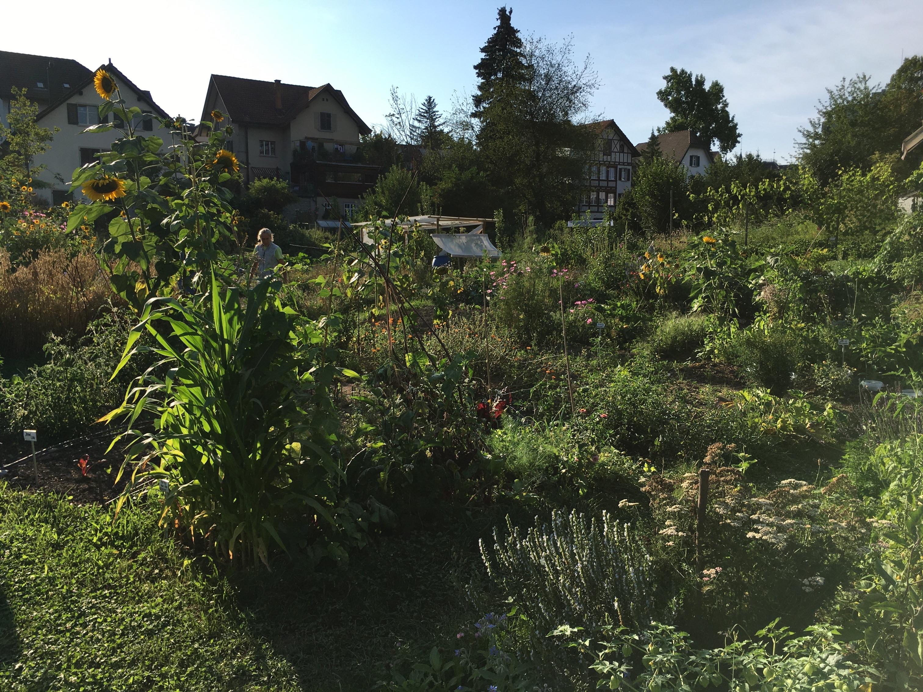 2020-08-13 Ogif Garten 3
