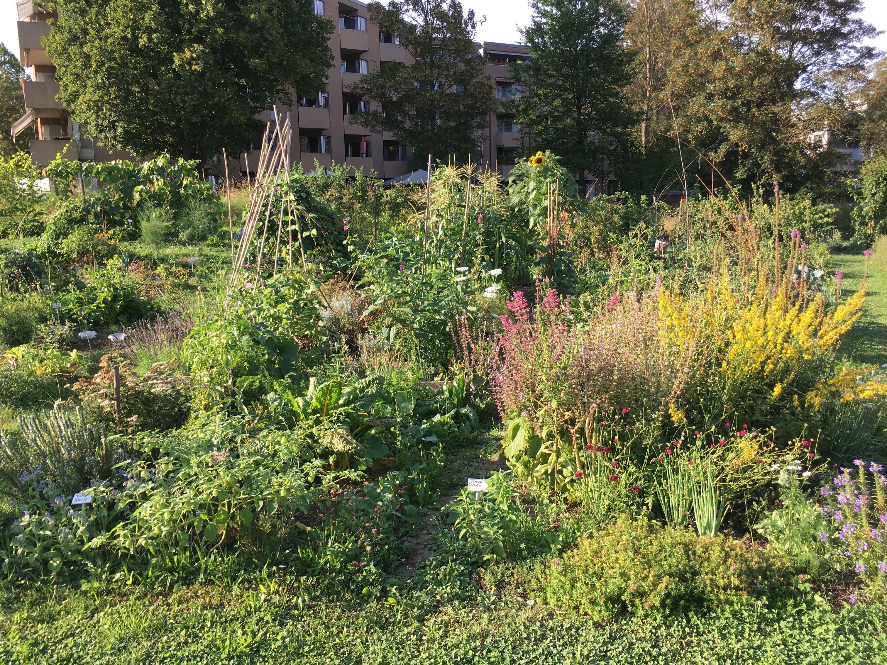 2020-08-13 Ogif Garten 4
