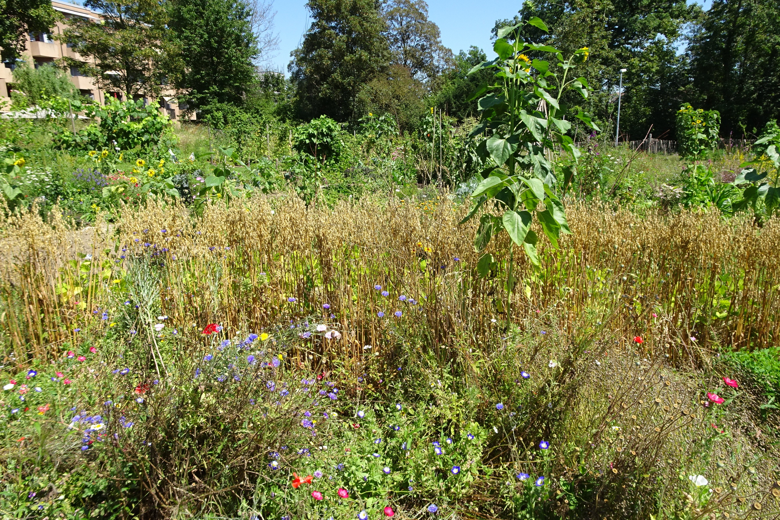 2020-08-07 Ogif Garten 01