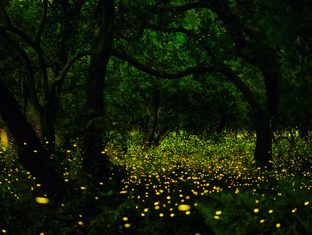 Lessons From the FireFlies: A Call to Unity