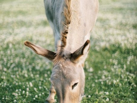 3 Lessons From Jesus Riding on a Donkey