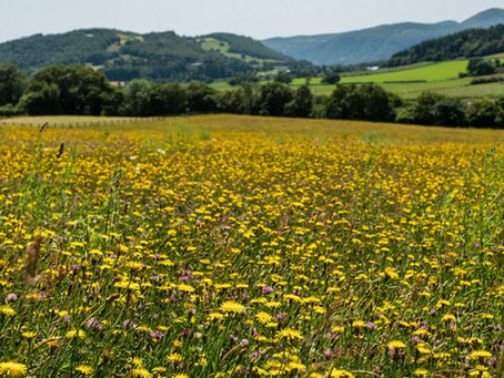Making More Magnificent Meadows!