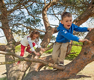 kids climb tree.png