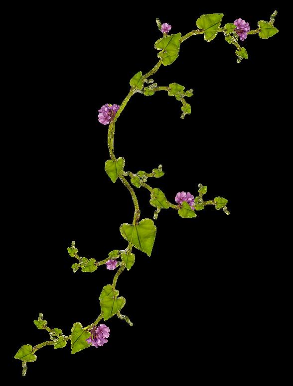 plante grimpante.png