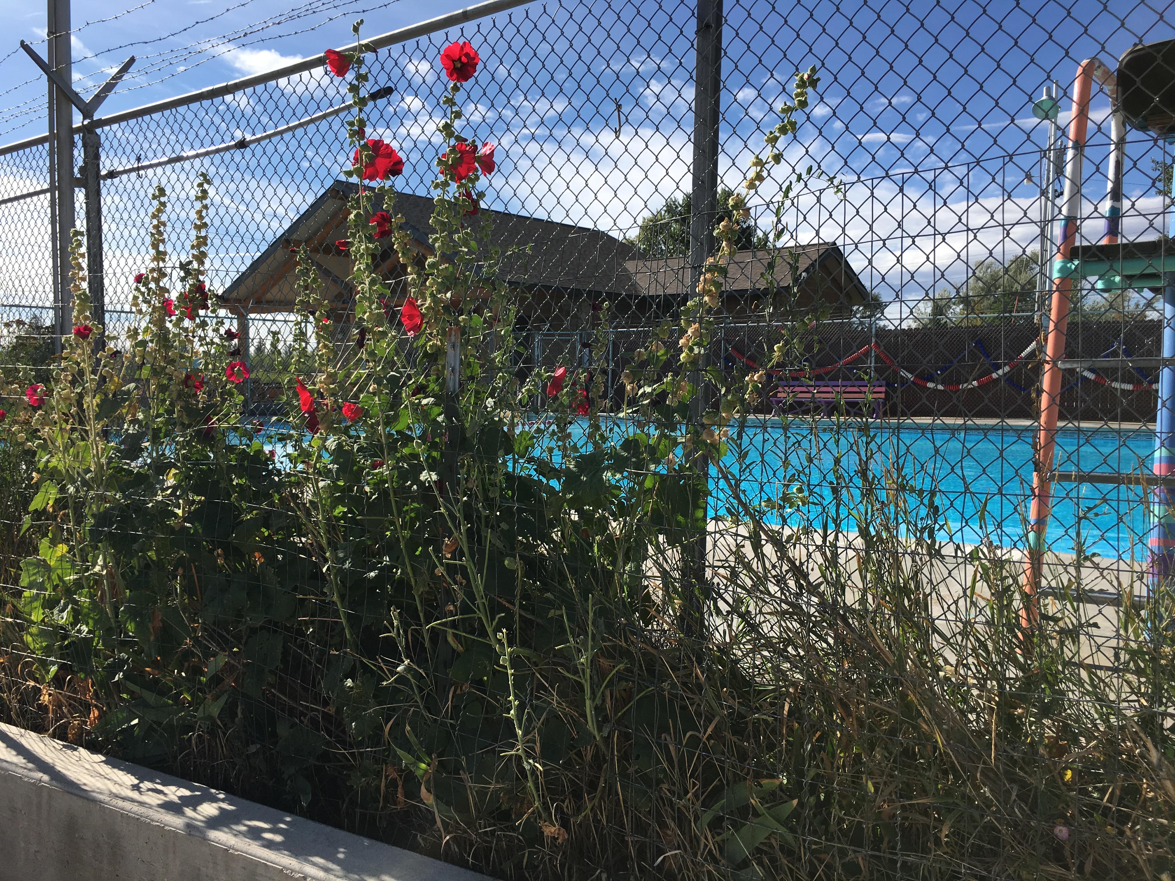 Town Swimming Pool