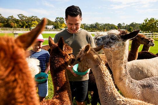 Hand feding Buddy. Photo by Destination NSW..jpg