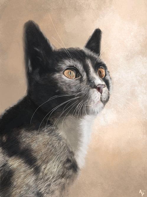 Brook's Kitty