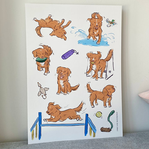 Nova Scotia Duck Tolling Retriever Print