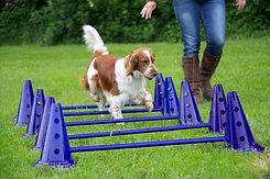 Workshops met hond Hondenschool 'Het Klikt'