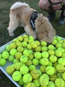 Sport & Spel Hondenschool 'Het Klikt'
